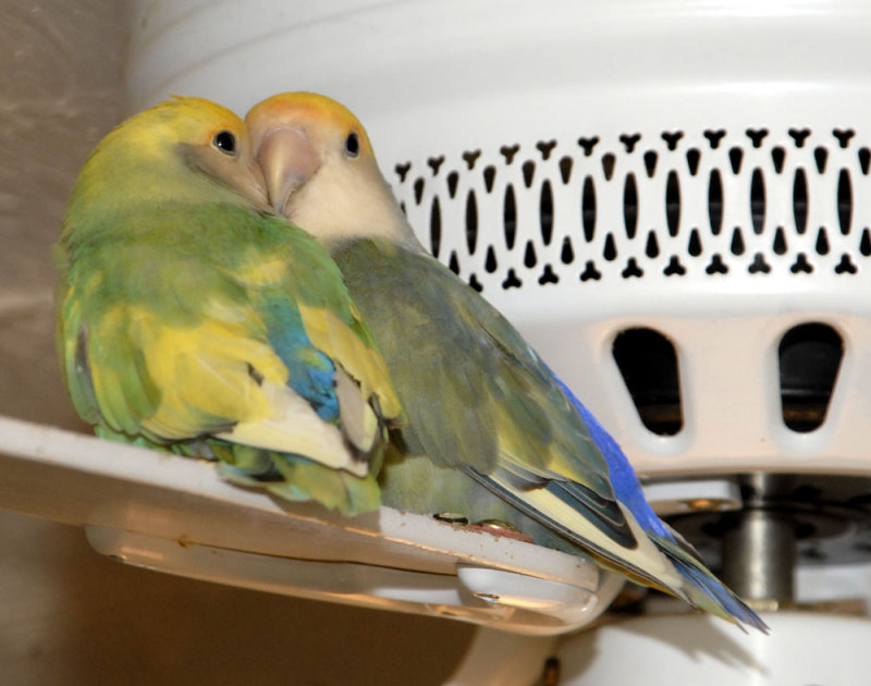 Twinkle and Emerson - Lovebirds from McKees cropped smallfile _DSC0574.jpg