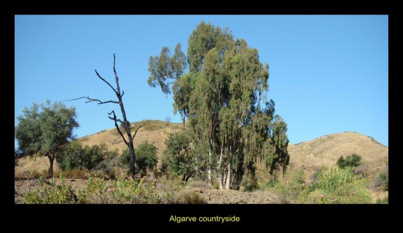 Algarve countryside
