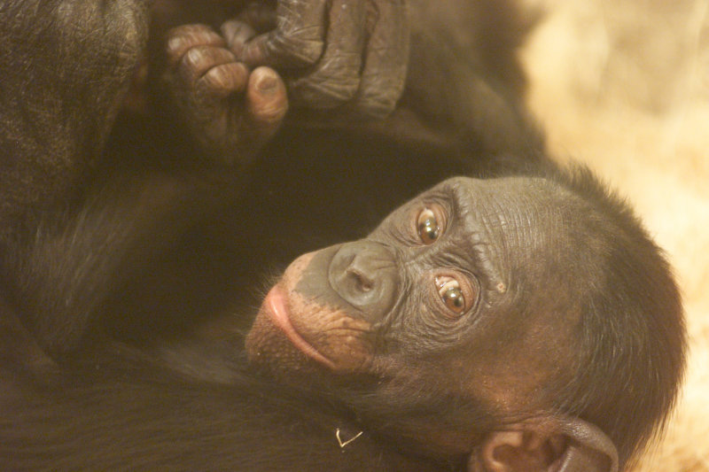 smile monkey.jpg