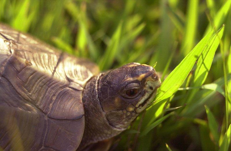 turtle turtle.jpg