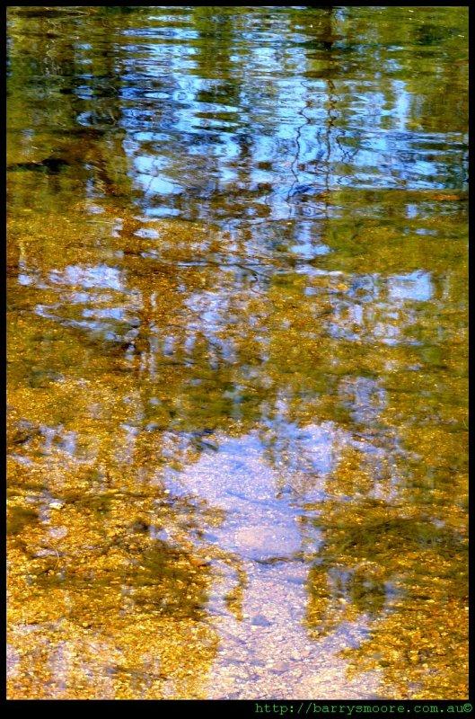 On Golden Pond!