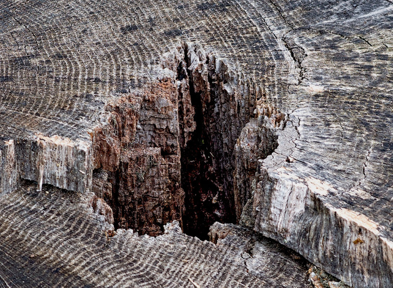 A tree stump.