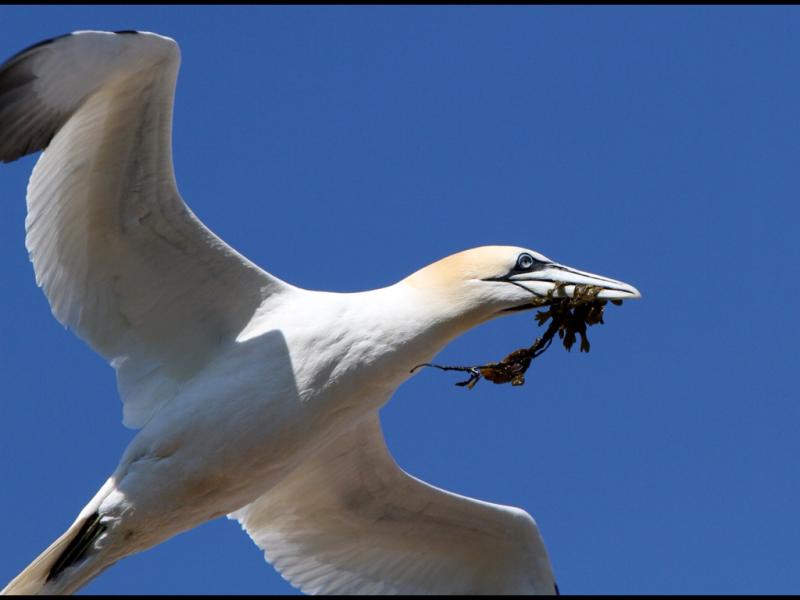 pour le nid