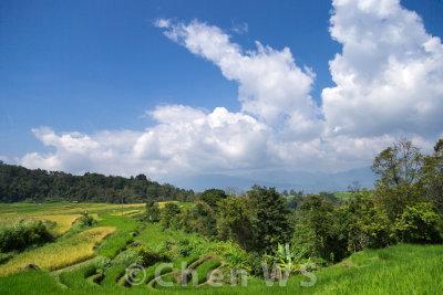 Farmers on the rice fields of Batu Sangkar