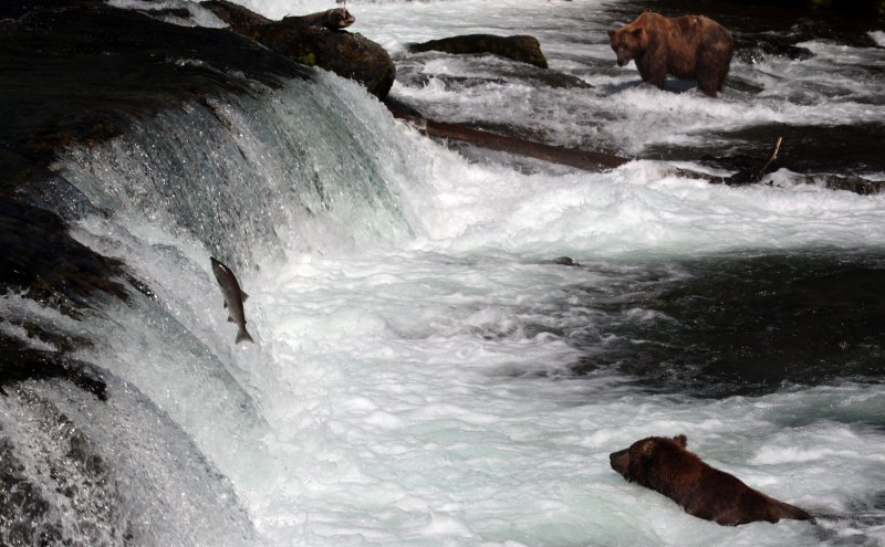 Brooks Falls - Katmai NP
