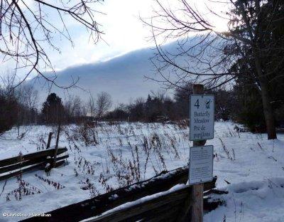 Butterfly Meadow in winter