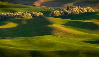 Sunlit tree line