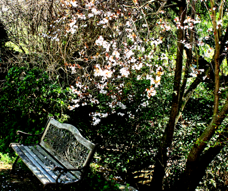 garden bench in late winter.png