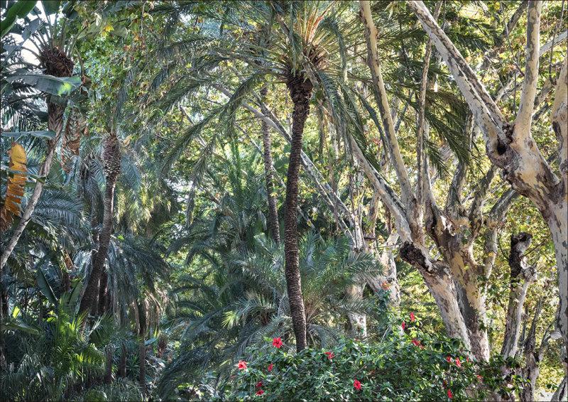 Semi Tropical Planting