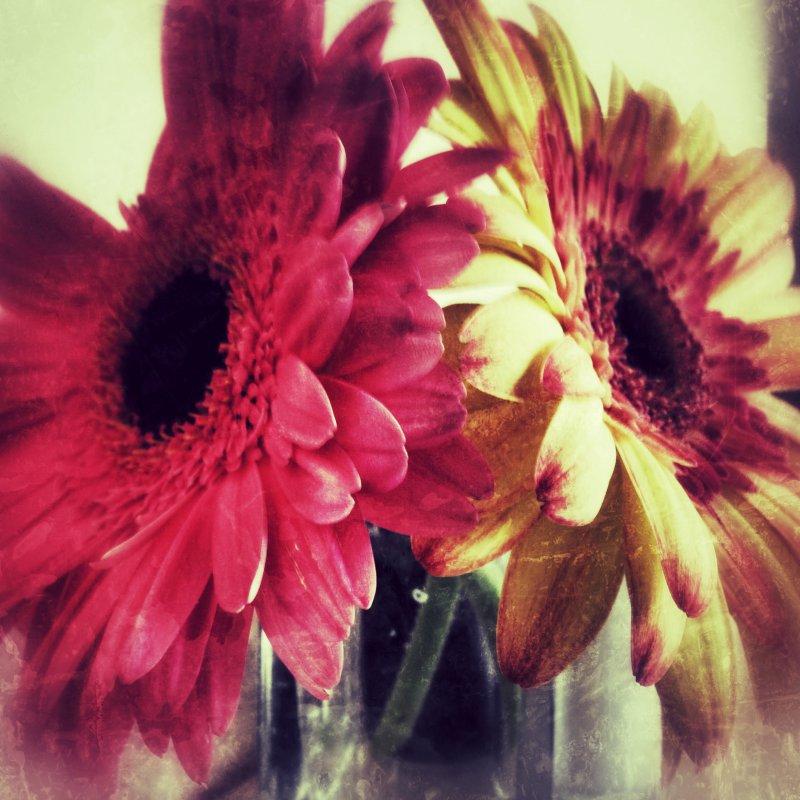 Montecito Inn Flowers.jpeg