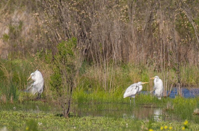 meadow preserve-5335.jpg