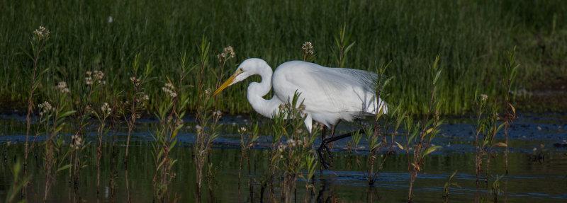Meadow Preserve-6169.jpg