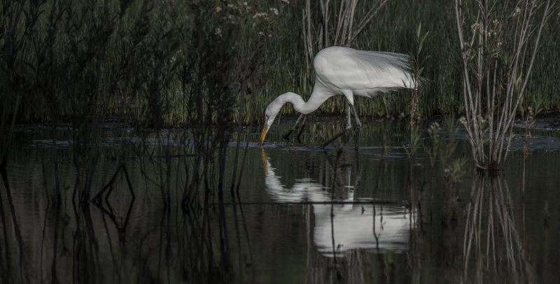 Meadow Preserve-6186.jpg