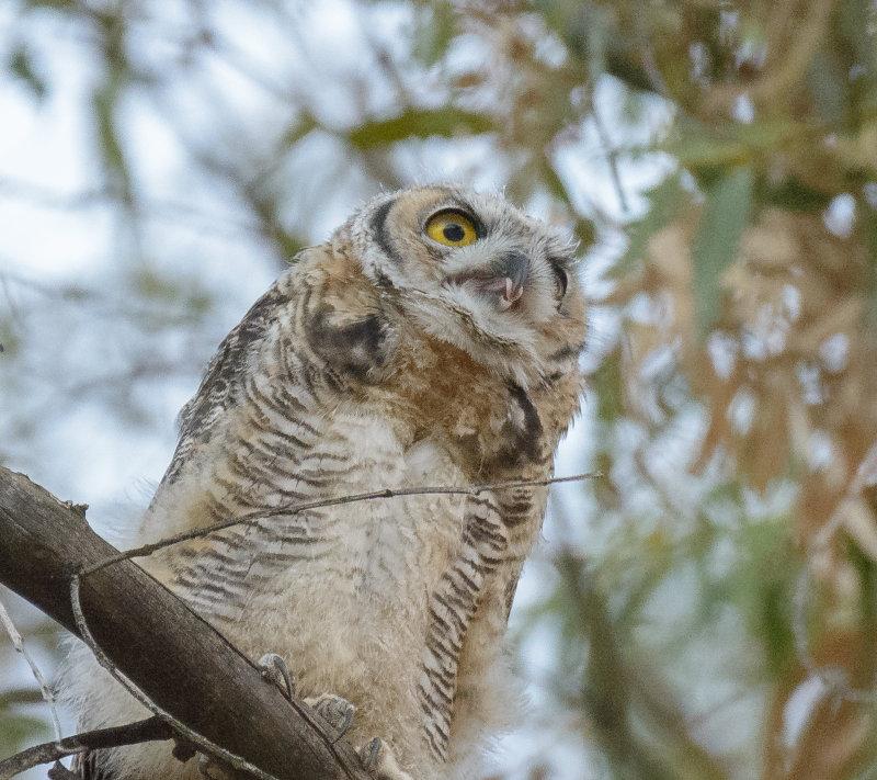 Owls-9172.jpg