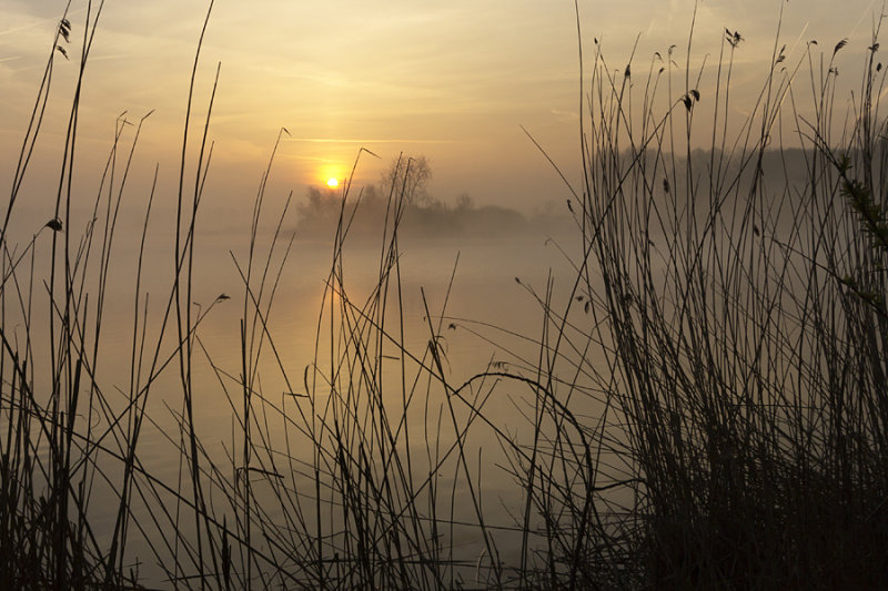 Hulst (Groot Eiland)