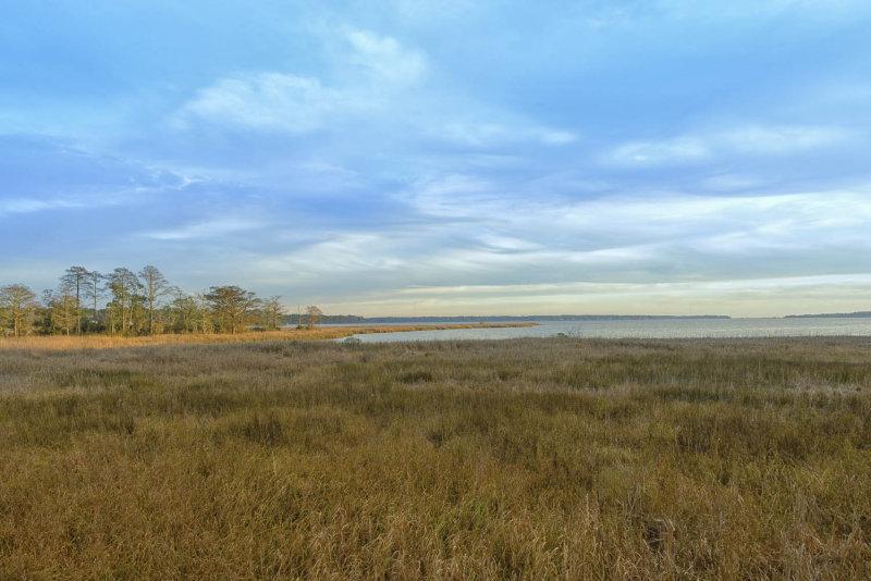 Marsh in winter reduced.jpg