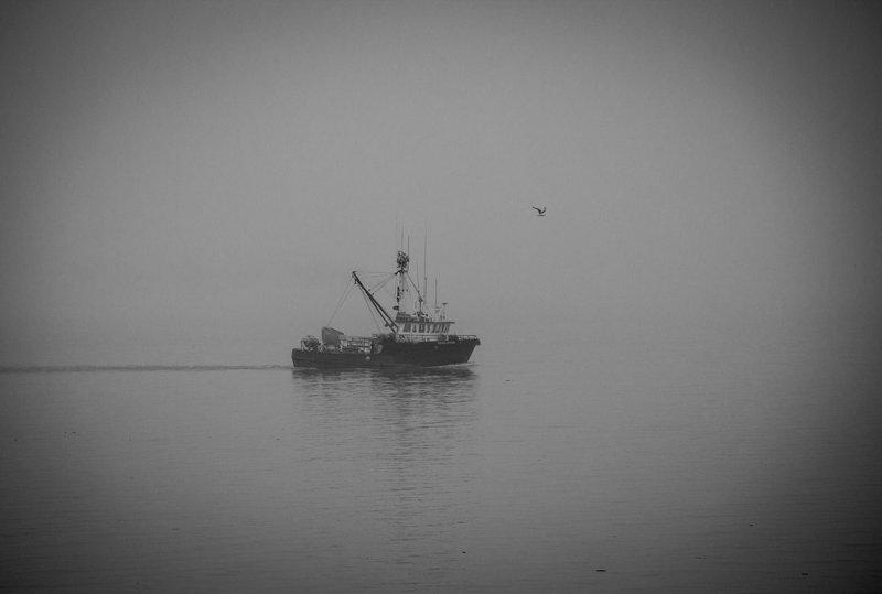 Prince William Sound on a foggy day. Near Valdez, AK. .jpg