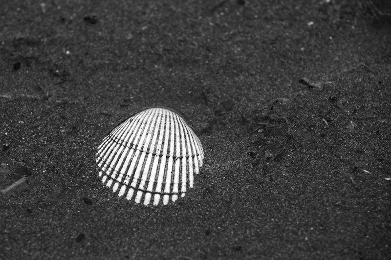 Clam shell. Homer, Alaska.  CZ2A9845.jpg