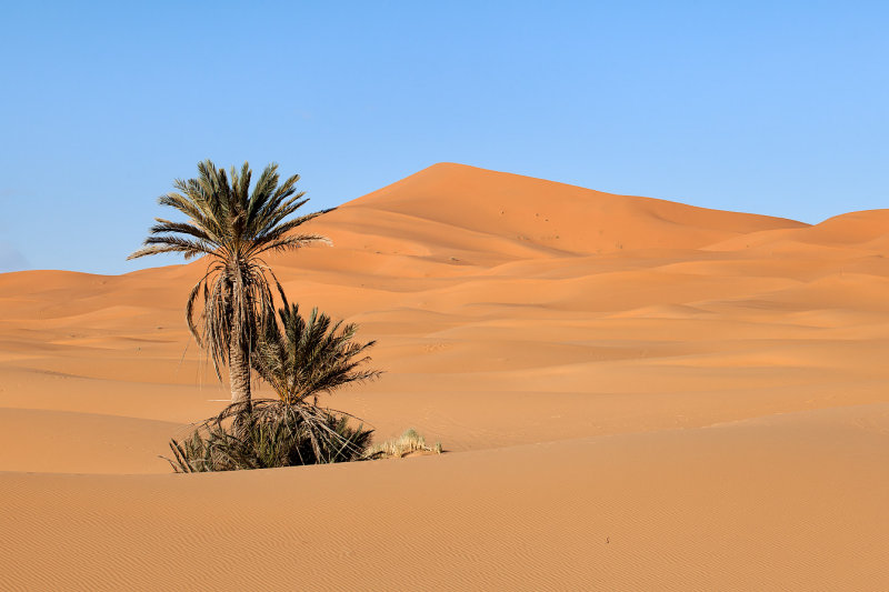 Palm and Dunes