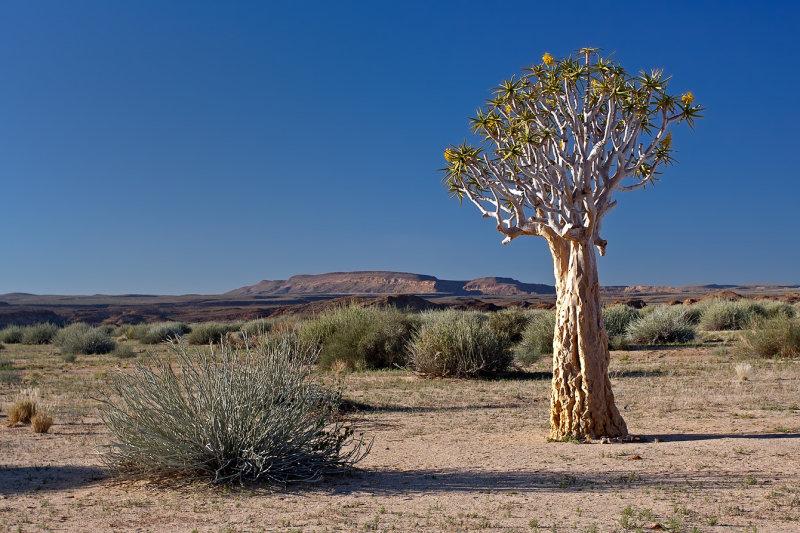 Quiver Tree and Bush