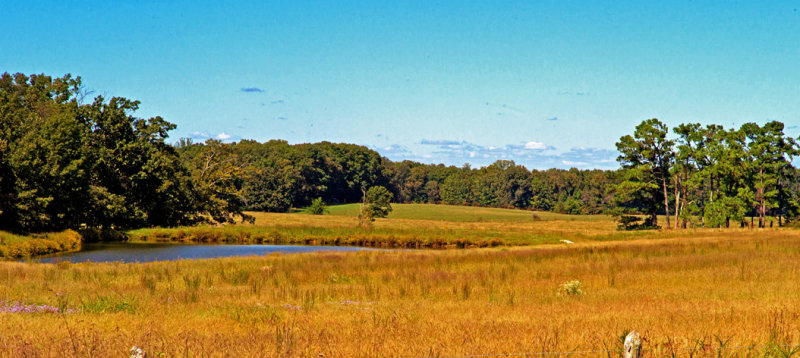 Meadow in Lawrence County