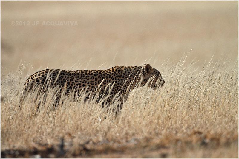 Leopard 7388