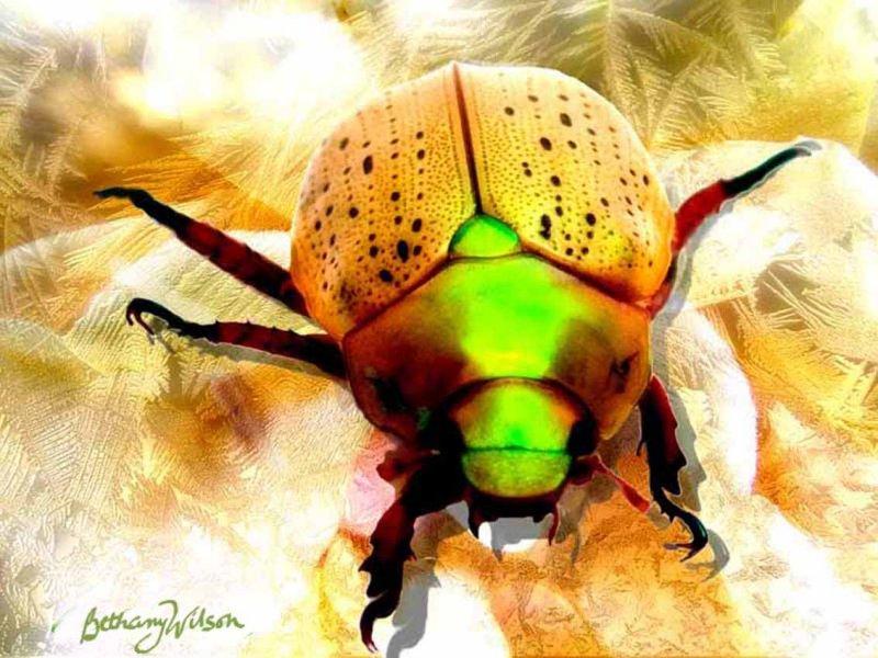 Robo Beetle