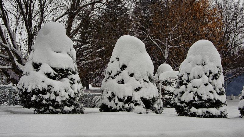 _SDP7854.jpg Snow for Christmas