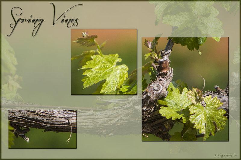 Spring Vines