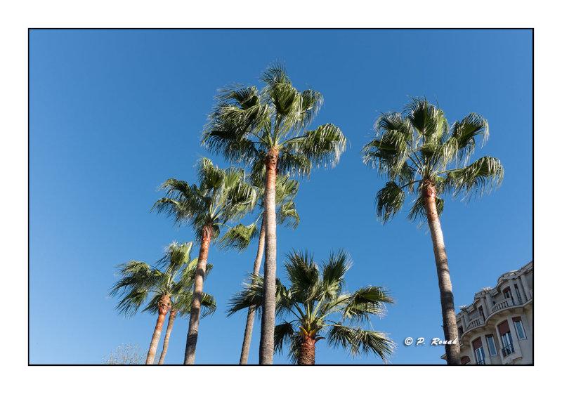 Palmiers sur Nice Promenade - 2700