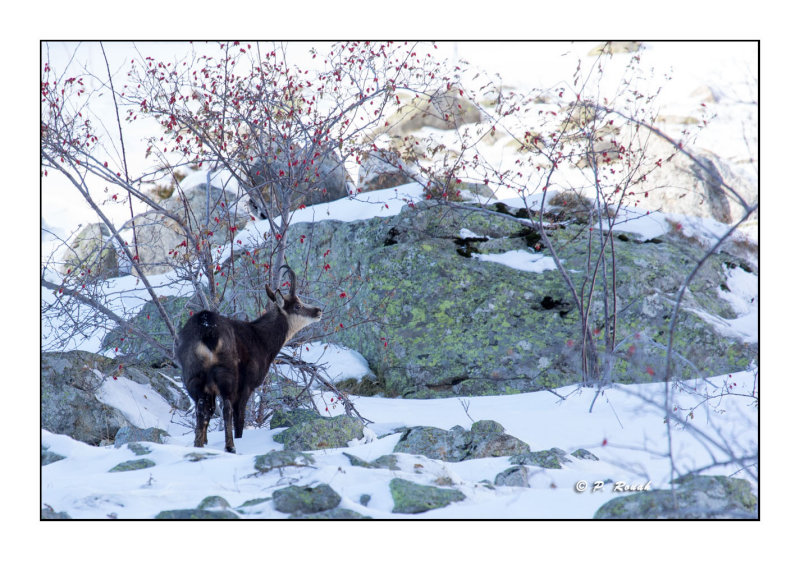 La Vallée de la Gordolasque - 4255