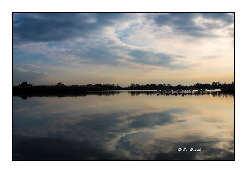 Marais de Pont de Gau - 0071