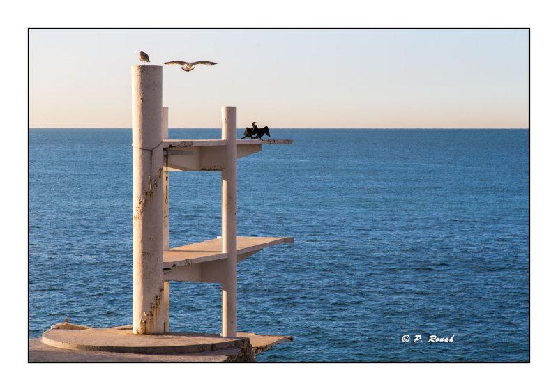 Plongeoir - Nice - 6897