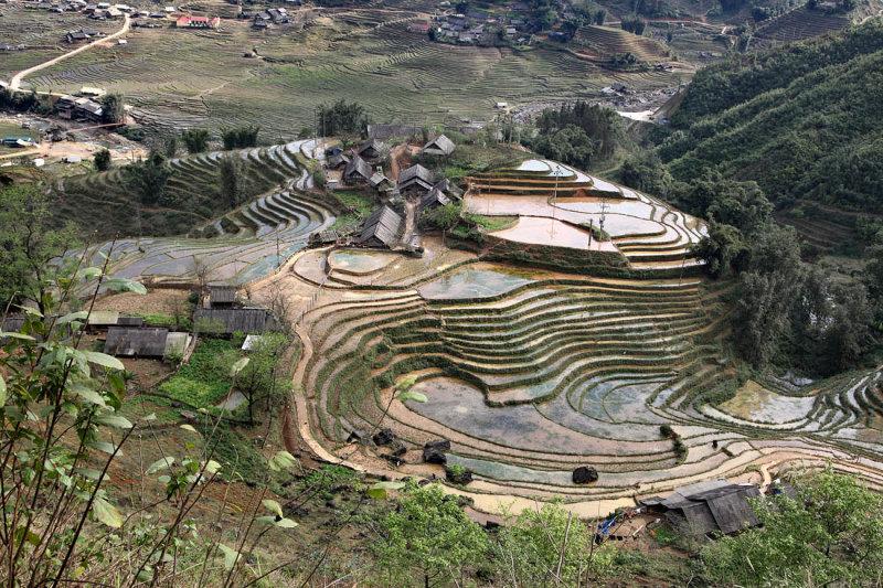 Landscape in SaPa /  Terraced fields in Sa Pa