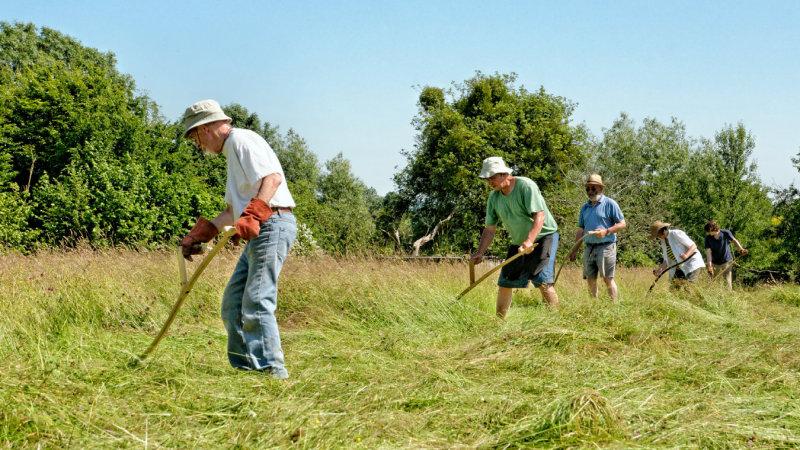 Herefordshire Haymaking