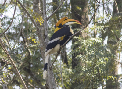 India 2015 (Western Ghats)