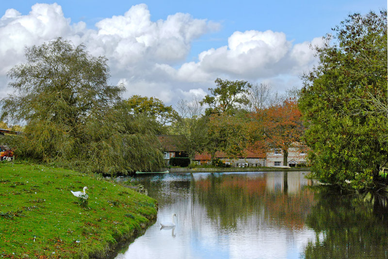 Longleat ~ pond and swans (2262)
