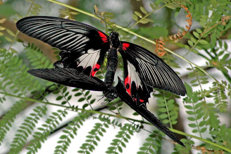 Butterfly 03 ~ Buckfastleigh
