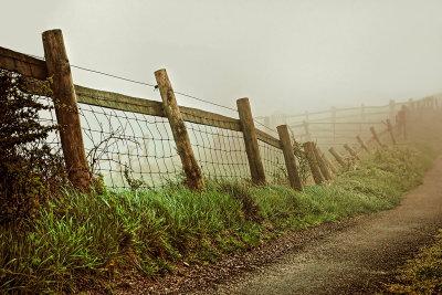 Fences in the mist, Eggardon Hill