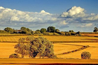 Fields near South Petherton (2297)