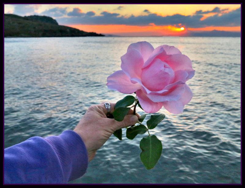 rose sunsetxxx.jpg