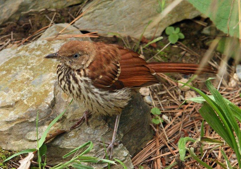 Blandy Bird
