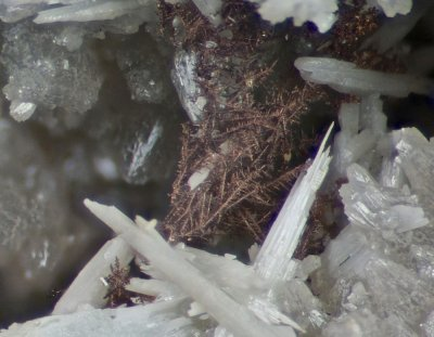 Dendritic native silver on matrix with cerussite crystals to 5 mm on 46 mm matrix. Force Crag Mine, Coledale, Cumbria.
