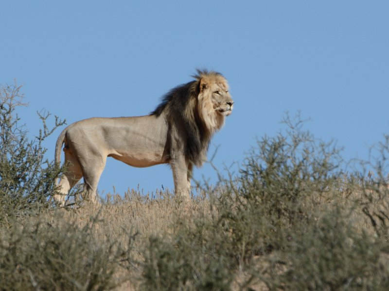 The only lion we saw