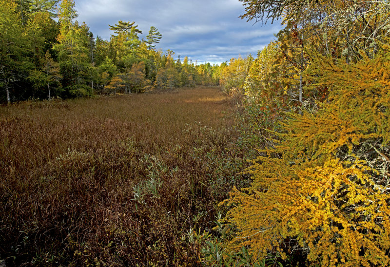 Swale bordered by Tamarack and Cedar trees, Ridges Sanctuary, Door County, WI