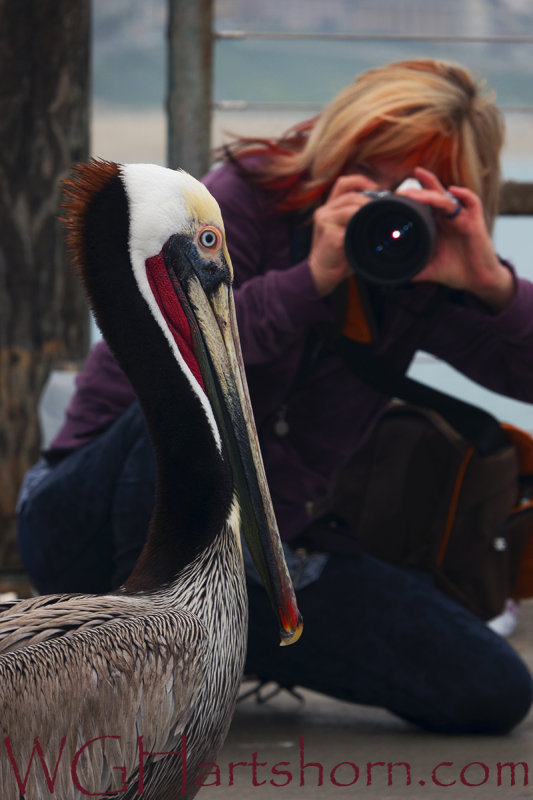 Pelican Focused In