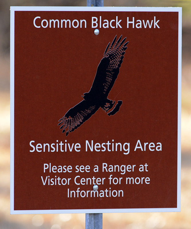 Common Black Hawk Nesting Area