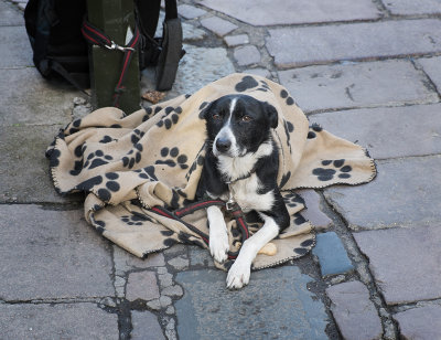The Big Issue Guard Dog