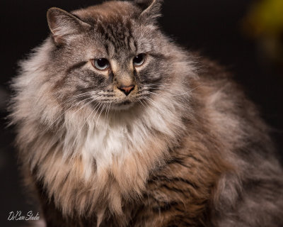 pet_portraits