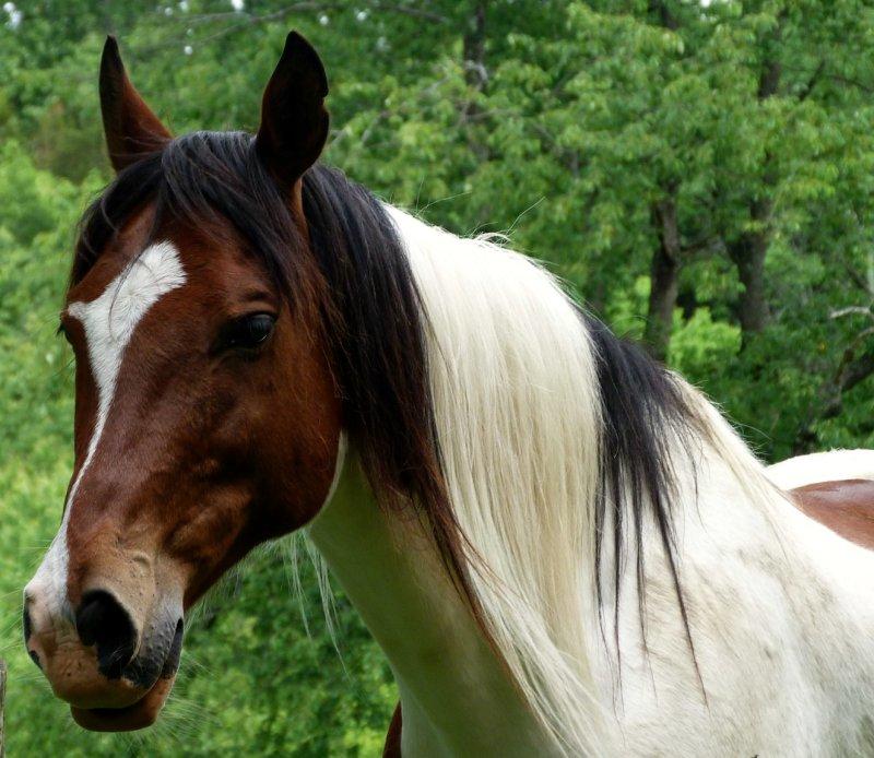 sparta horse 2.jpg